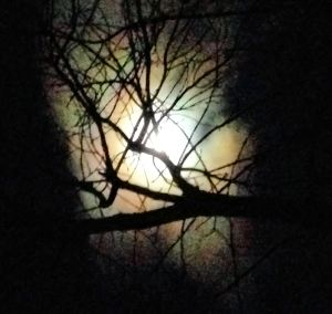 nov full moon 4